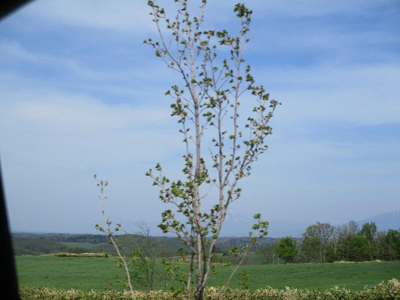 5月26日(日)・・・19日の休業日。東藻琴の芝桜②_f0202703_01202116.jpg