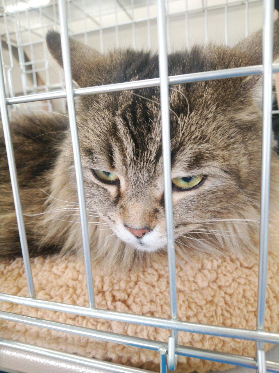 5/26 猫譲渡会_f0255704_00112562.jpg