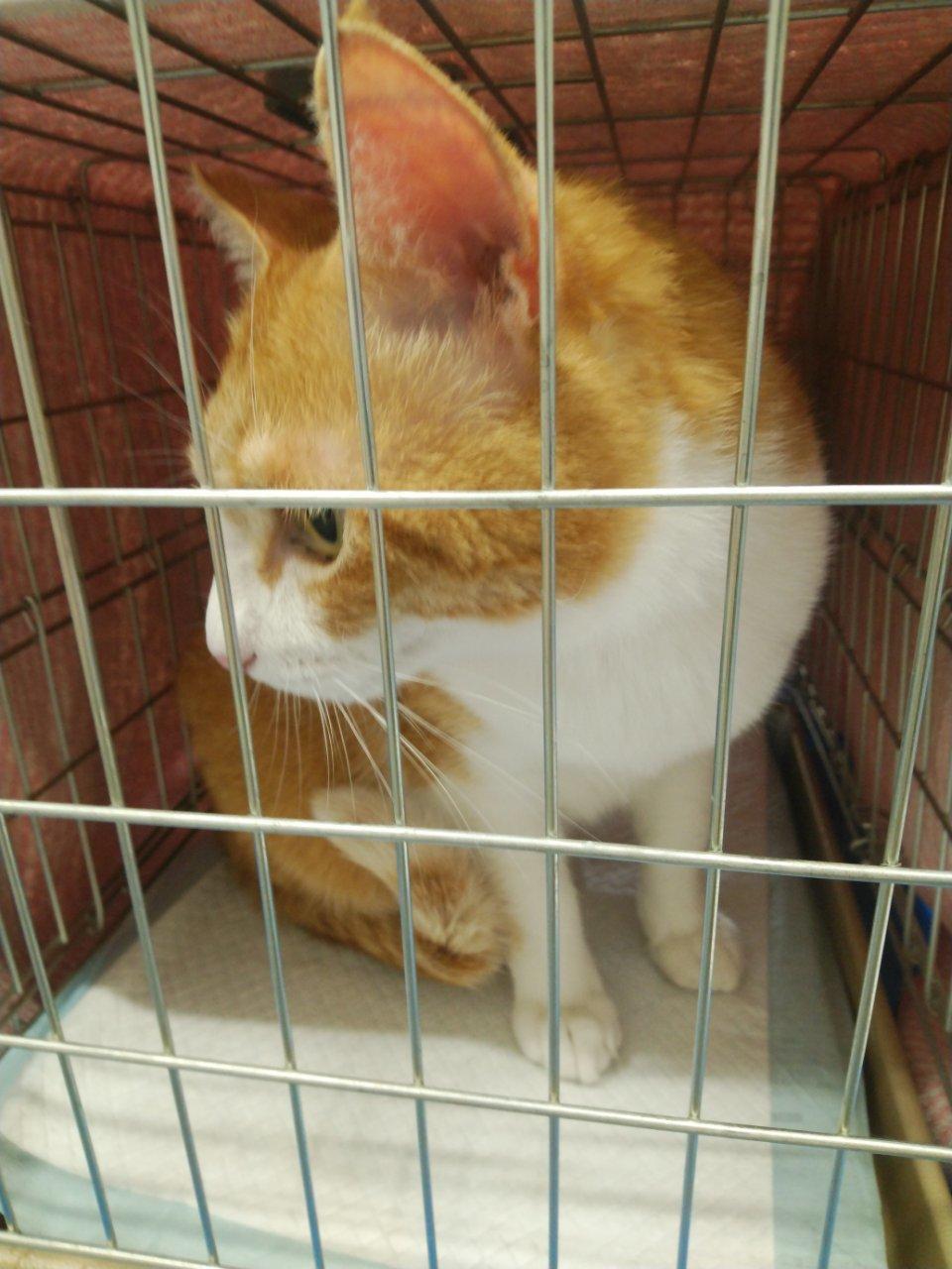 5/26 猫譲渡会_f0255704_00180215.jpg
