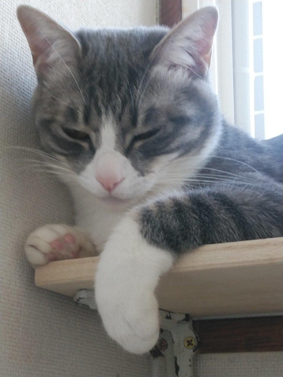 5/26 猫譲渡会_f0255704_00195471.jpg