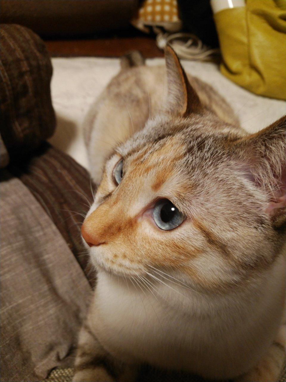 5/26 猫譲渡会_f0255704_00212641.jpg