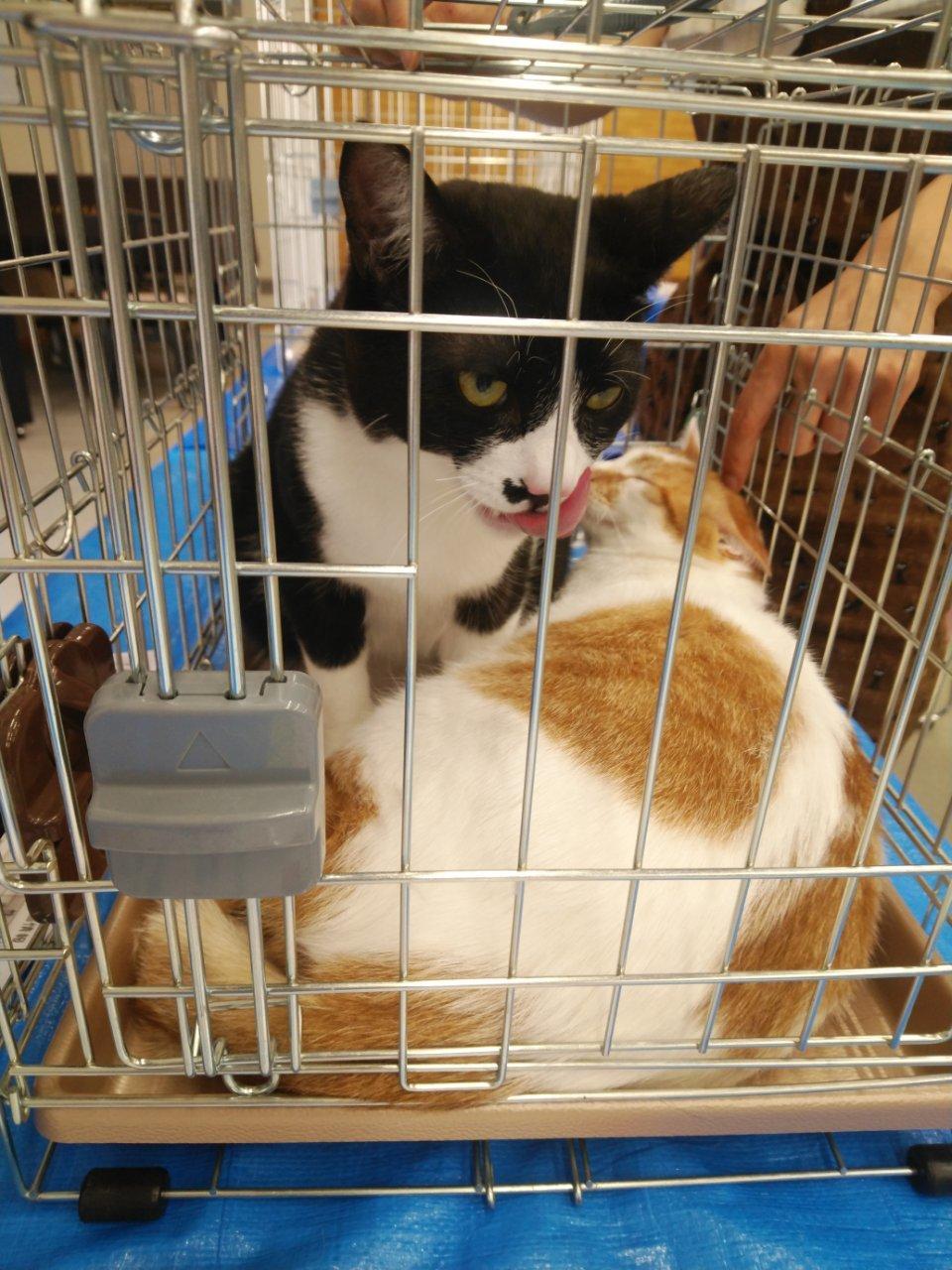5/26 猫譲渡会_f0255704_00424107.jpg