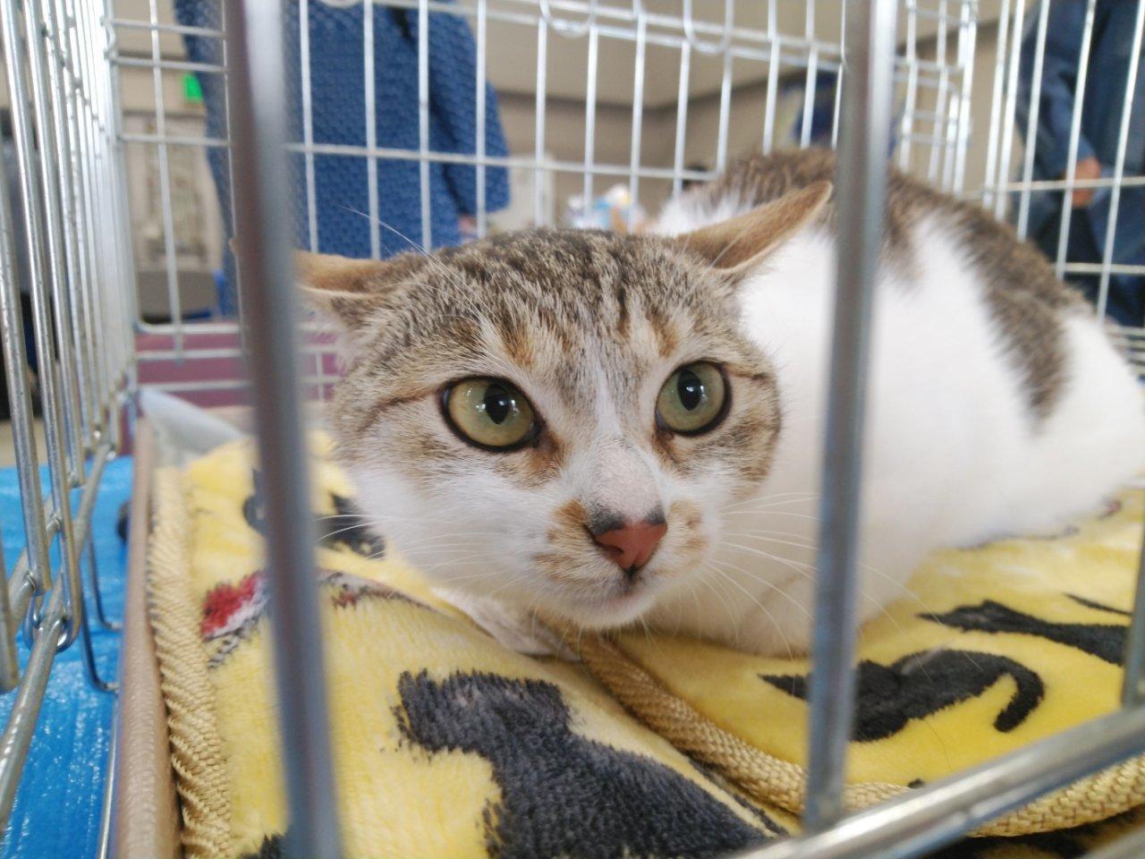 5/26 猫譲渡会_f0255704_00430395.jpg