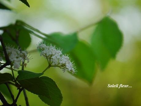 緑きらめく5月に・・・_c0098807_22102857.jpg