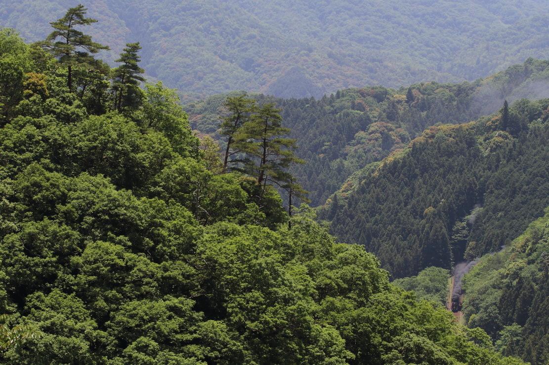 緑の山を黒煙が突き抜ける - 2019年初夏・山口線 -_b0190710_00524190.jpg