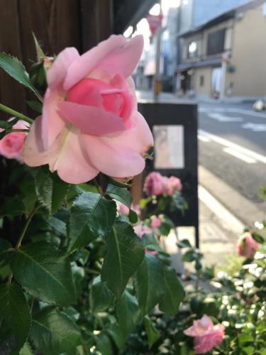 開花 Blooming〜花にかこまれて_e0103327_10524701.jpg