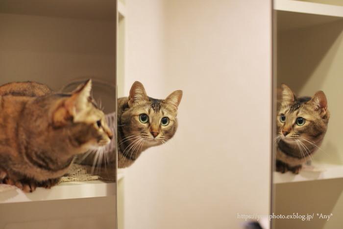 猫がいる暮らし - 21 -_e0347431_12404625.jpg