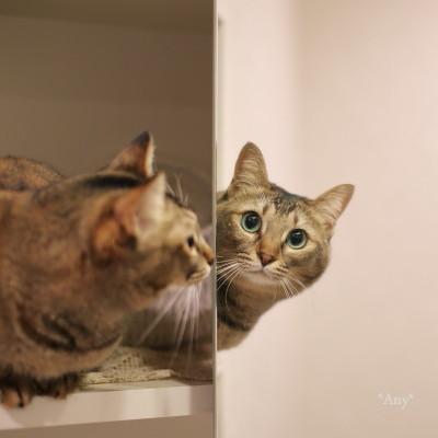 猫がいる暮らし - 21 -_e0347431_12410020.jpg