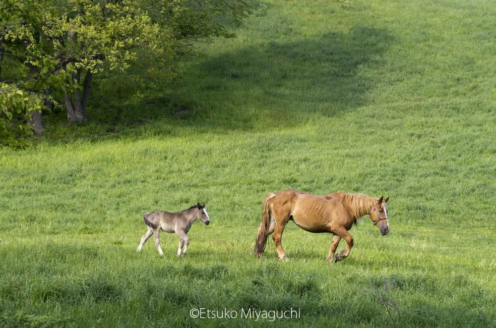お馬さんたち_f0152939_15081596.jpg