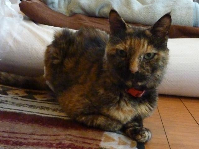 猫のお留守番 かげちゃん編。_a0143140_22574841.jpg