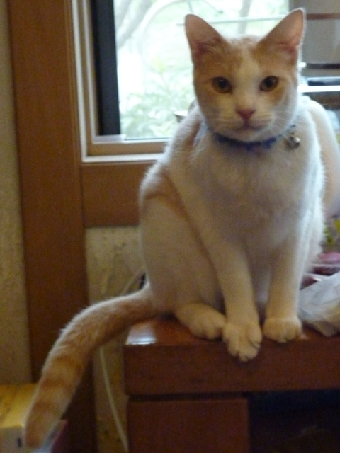 猫のお留守番 こうたろうくん編。_a0143140_23070383.jpg
