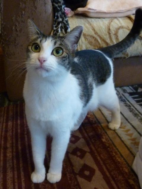 猫のお留守番 はなちゃん編。_a0143140_23094615.jpg