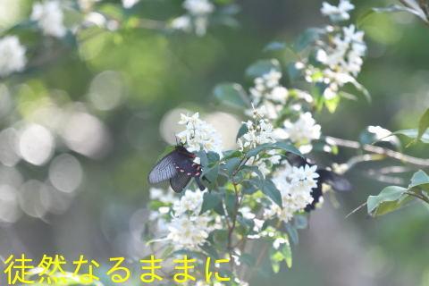 d0285540_14212115.jpg