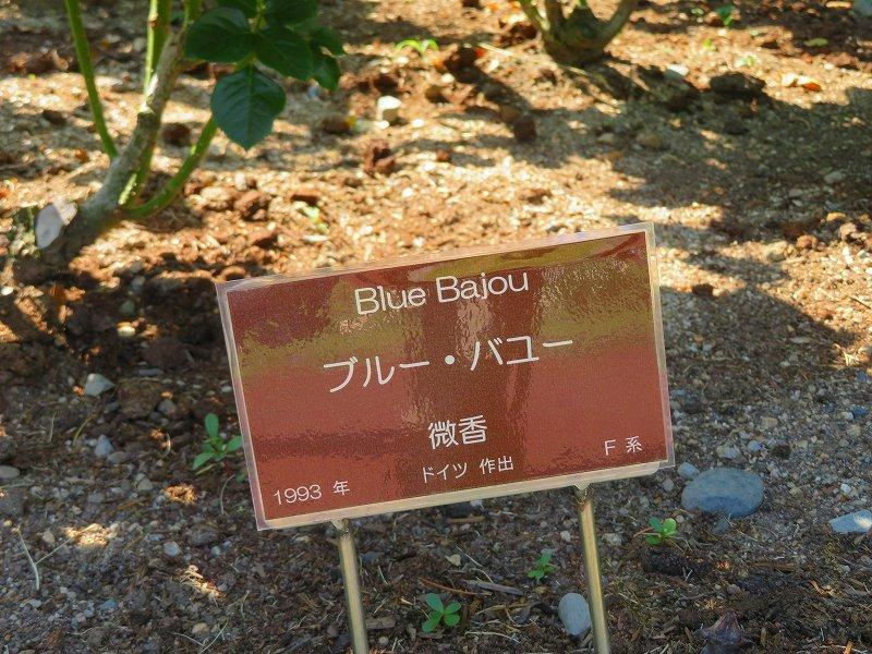 満開の「バラ園」④(植物園)20190523_e0237645_10264358.jpg