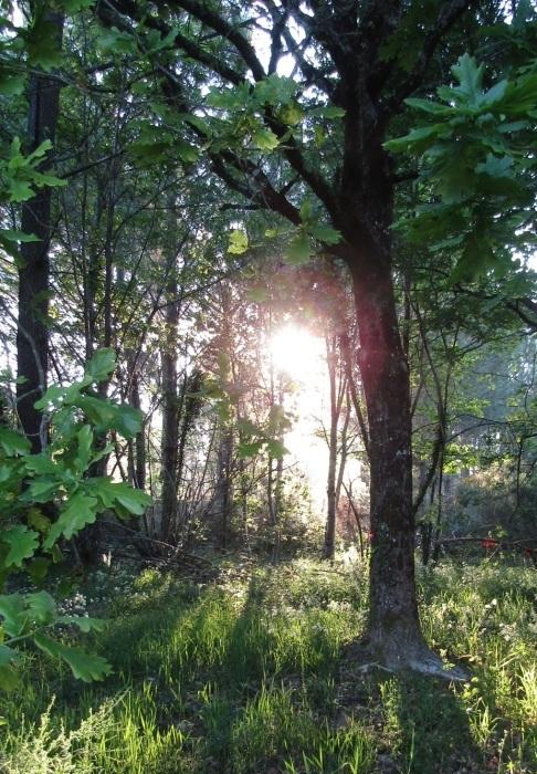 森の朝 皐月_b0287748_16542071.jpg