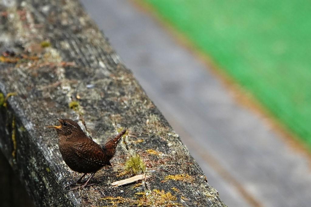 野鳥トレ163 春の信州ツアー2_b0227552_19121333.jpg