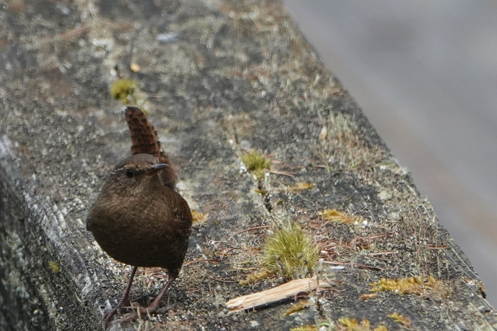 野鳥トレ163 春の信州ツアー2_b0227552_19122028.jpg