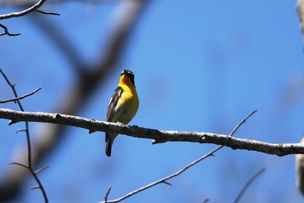 野鳥トレ163 春の信州ツアー2_b0227552_19134410.jpg