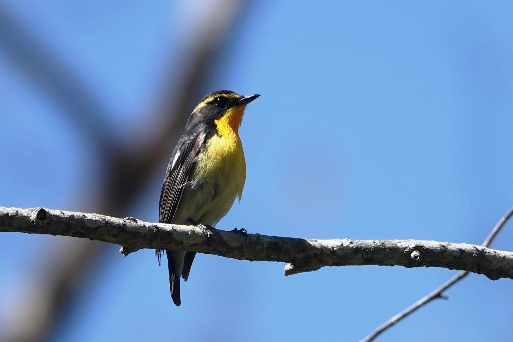 野鳥トレ163 春の信州ツアー2_b0227552_19135498.jpg