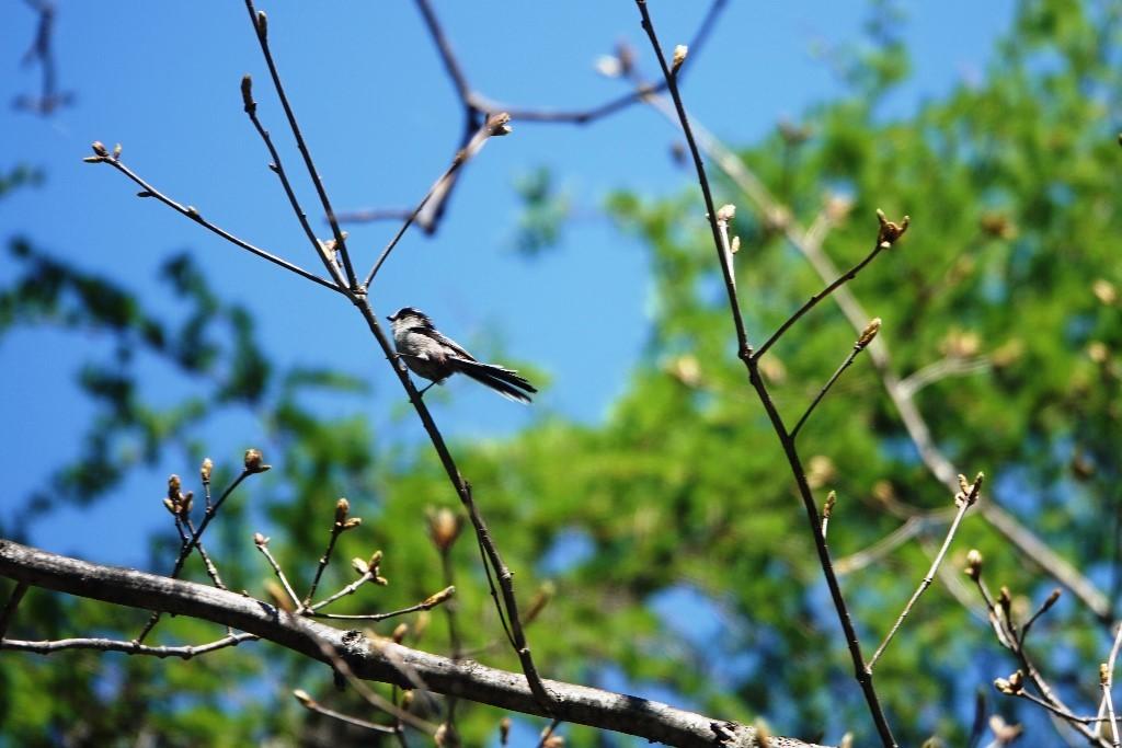 野鳥トレ163 春の信州ツアー2_b0227552_19144254.jpg