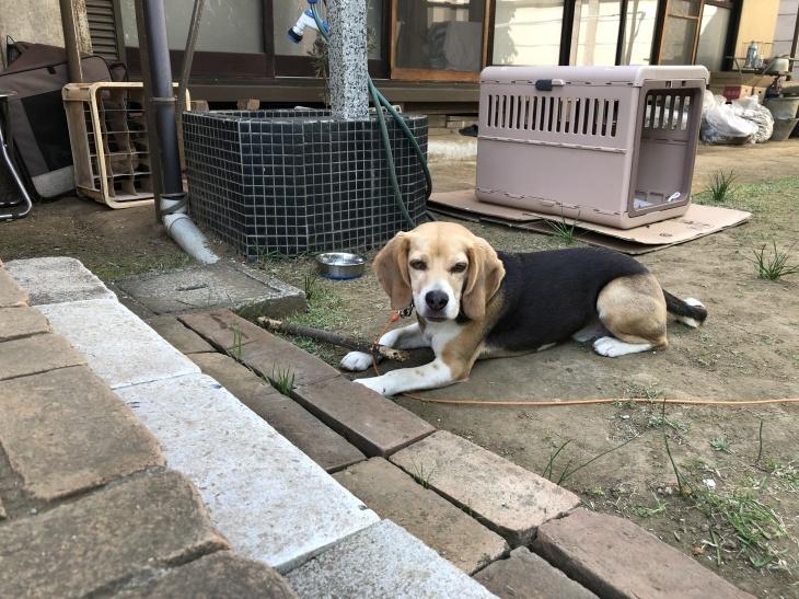 アトリエMIWA〜庭でスケッチ❗️_c0131063_11070805.jpg