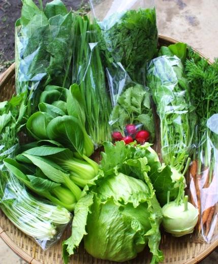 今週の野菜セット(5/28~6/1着)_c0110869_12335615.jpg