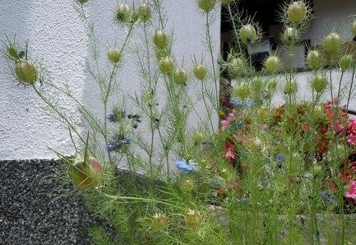 路傍の花、樹々の鳥(345) ~ 形には理由がある ~_b0102572_17114489.jpg