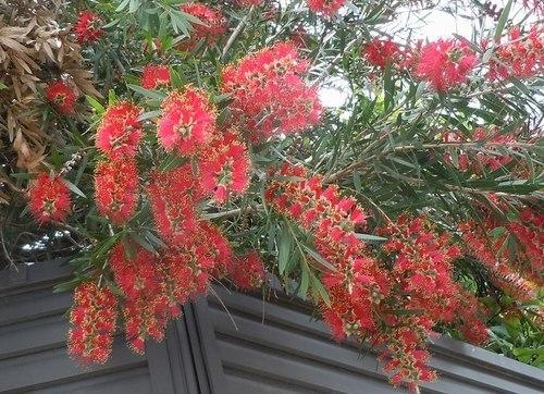 路傍の花、樹々の鳥(345) ~ 形には理由がある ~_b0102572_17131852.jpg