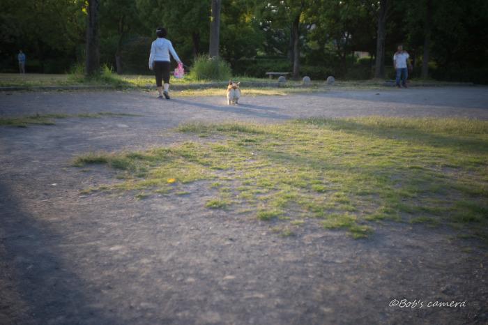 早朝の公園_b0246079_04390283.jpg
