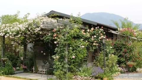 ◆素敵なお庭・・多可町のOG_e0154682_21593322.jpg