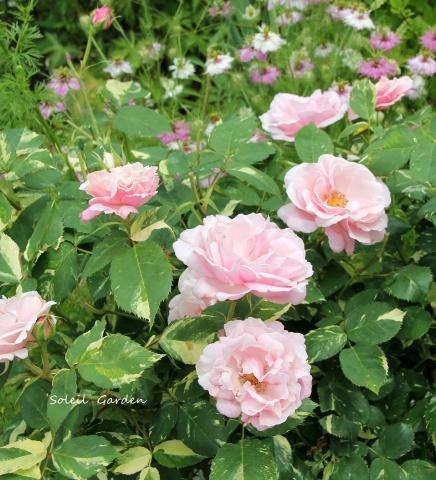 ◆素敵なお庭・・多可町のOG_e0154682_22013365.jpg