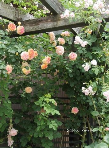 ◆素敵なお庭・・多可町のOG_e0154682_22014337.jpg