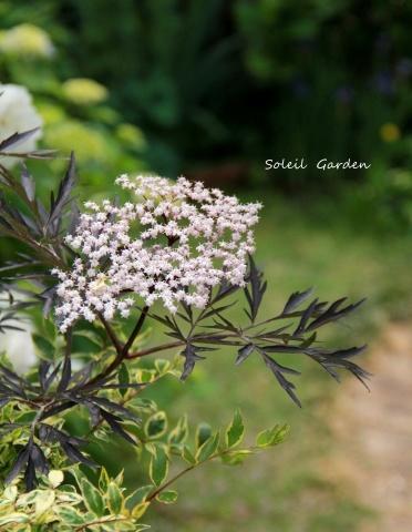 ◆素敵なお庭・・多可町のOG_e0154682_22131632.jpg