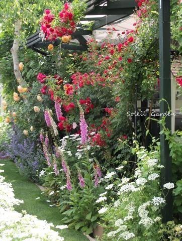◆素敵なお庭・・多可町のOG_e0154682_22203063.jpg