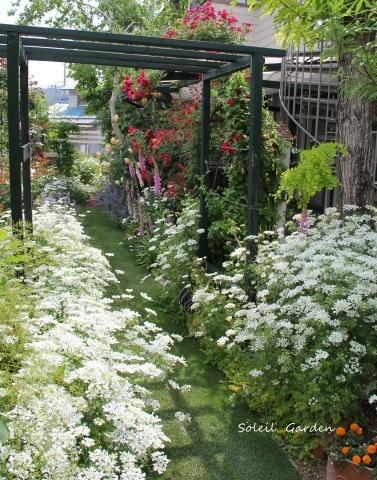 ◆素敵なお庭・・多可町のOG_e0154682_22205452.jpg