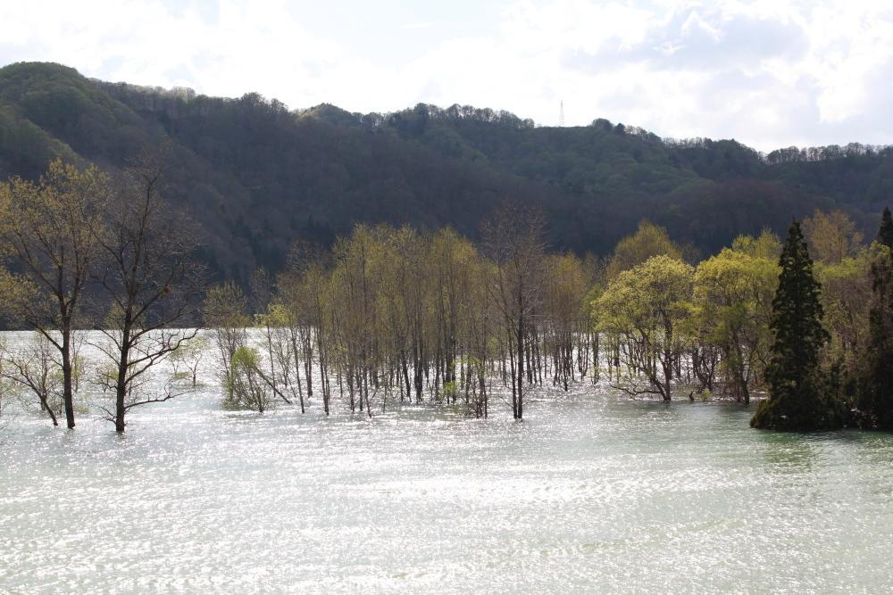 西和賀町 錦秋湖に沈む新緑 ラスト_e0165983_09420876.jpg