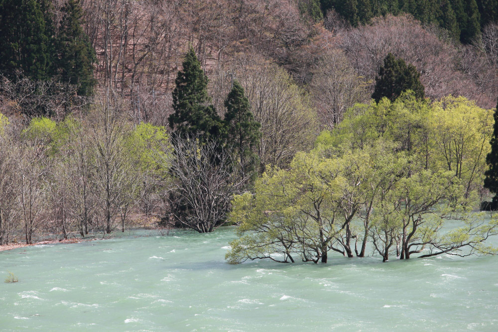 西和賀町 錦秋湖に沈む新緑 ラスト_e0165983_09421426.jpg