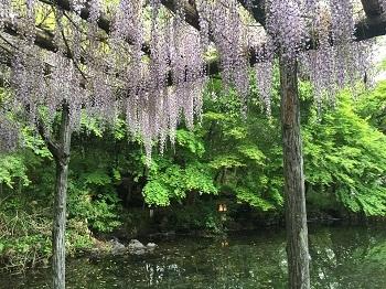 ゴールデンウィーク 富士山の旅~☆ 2日目_e0123286_18321261.jpg