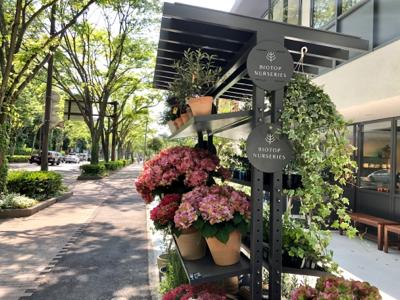 ビオトープ福岡_a0236996_21443087.jpg