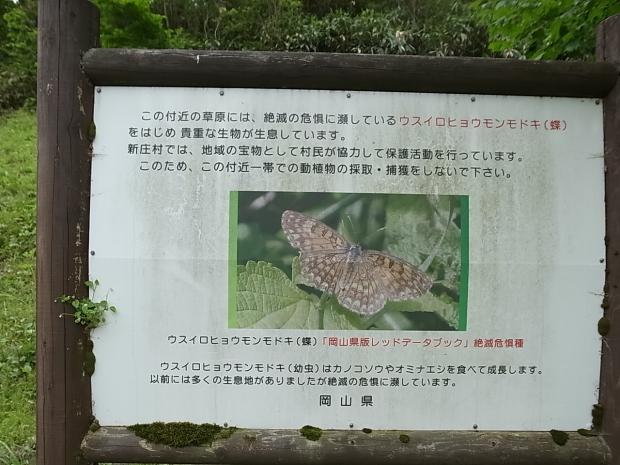 岡山県新庄村森林セラピー ゆりかごの森_f0197703_15384996.jpg