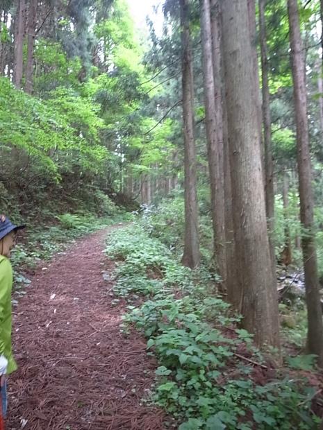 岡山県新庄村森林セラピー ゆりかごの森_f0197703_15462744.jpg