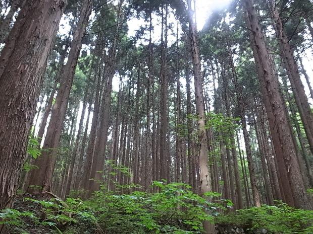 岡山県新庄村森林セラピー ゆりかごの森_f0197703_15480732.jpg
