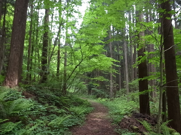 岡山県新庄村森林セラピー ゆりかごの森_f0197703_16004641.jpg