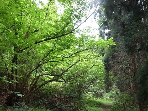 岡山県新庄村森林セラピー ゆりかごの森_f0197703_16020911.jpg