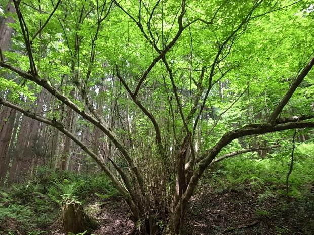 岡山県新庄村森林セラピー ゆりかごの森_f0197703_16023660.jpg