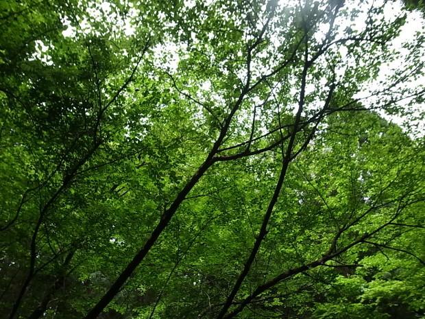 岡山県新庄村森林セラピー ゆりかごの森_f0197703_16053463.jpg