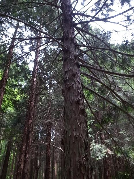 岡山県新庄村森林セラピー ゆりかごの森_f0197703_16072747.jpg