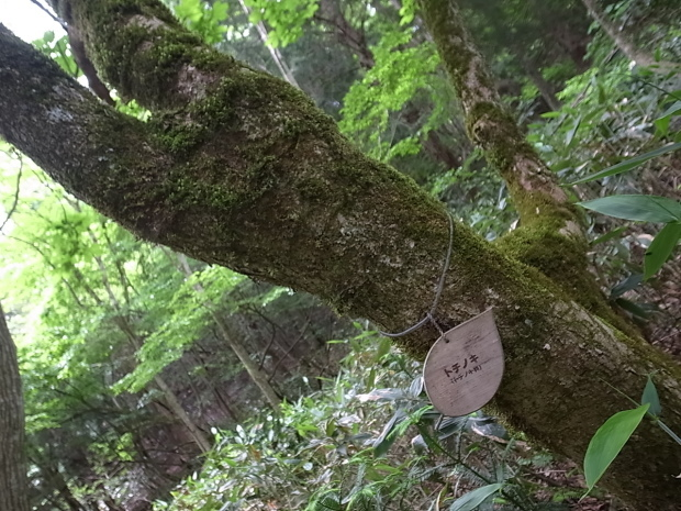 岡山県新庄村森林セラピー ゆりかごの森_f0197703_16101371.jpg