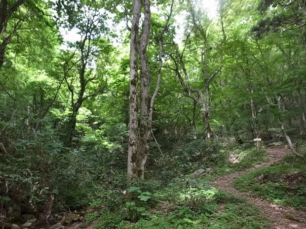 岡山県新庄村森林セラピー ゆりかごの森_f0197703_16105361.jpg