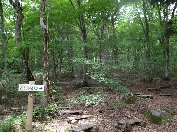 岡山県新庄村森林セラピー ゆりかごの森_f0197703_16113825.jpg